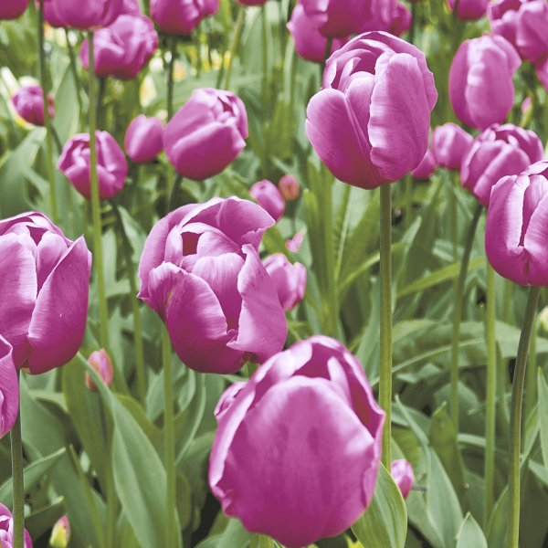 Papierservietten, Pink, Grün, 33 x 33 cm