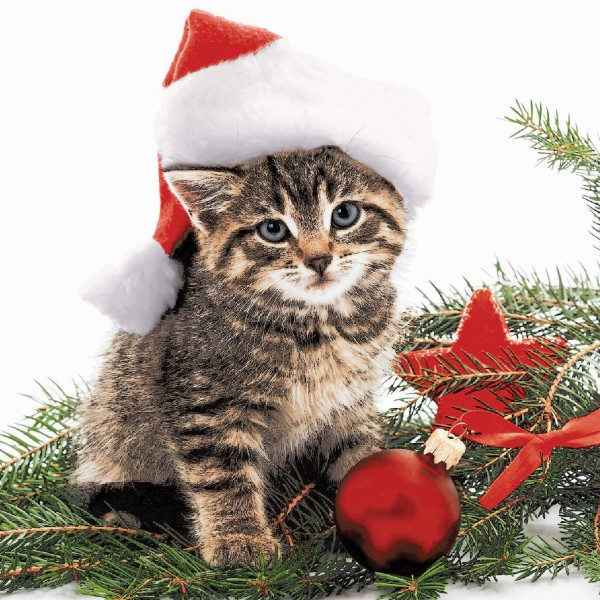 Papierservietten, Christmas Cat, 33x33cm